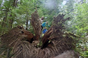 Tessa, Phoebe and couchsurfing host kid Kellea on tree roots at Cathedral Grove