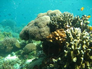 A coral head in the Philippines - check out all the zillions of little tropical fish in the background!