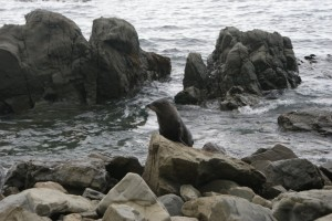 Our first seal spotting!