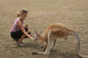 This is a kangaroo - see how its much bigger.  Tessa was hoping they'd be big enough to ride but their not.