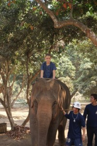 Phoebe the Mahout