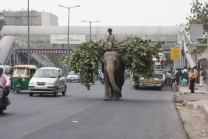 Yes, that is a giant elephant on the highway in Delhi!