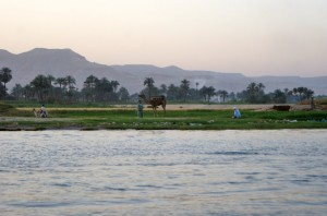 The scene from our hotel of the riverbank across the Nile.  Yes, real camels!