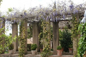 The Generalife Gardens were part of the Alhambra's complex, but are across a ravine on another mountain.  They were aweome, very formal with lots of cool buildings and hardscape making it seem more like a floral village rather than just a garden.  It was a little early for their roses to be in bloom, but the wisteria and lady's bank were putting on quite a show, as were the orange trees.